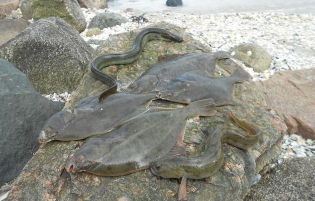 Fisk fra Stranden ved Hedebo Strand Camping. Fang til din egen fiske-grillbuffet.