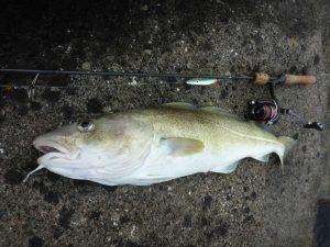 Snurrebassen kan også fange torsk